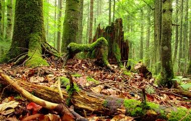 forest atrium